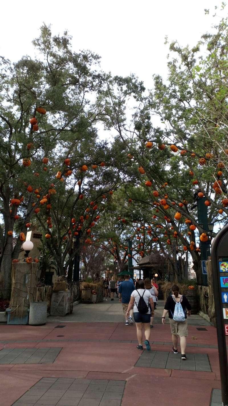 [Halloween 2018] Universal Studios, Disney Cruise Line dans les caraïbes et Gatorland Dsc_0549