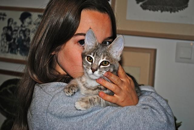 Nikita, femelle européenne tigrée gris , née le 13 juillet 2017 - Page 3 Dsc_0026
