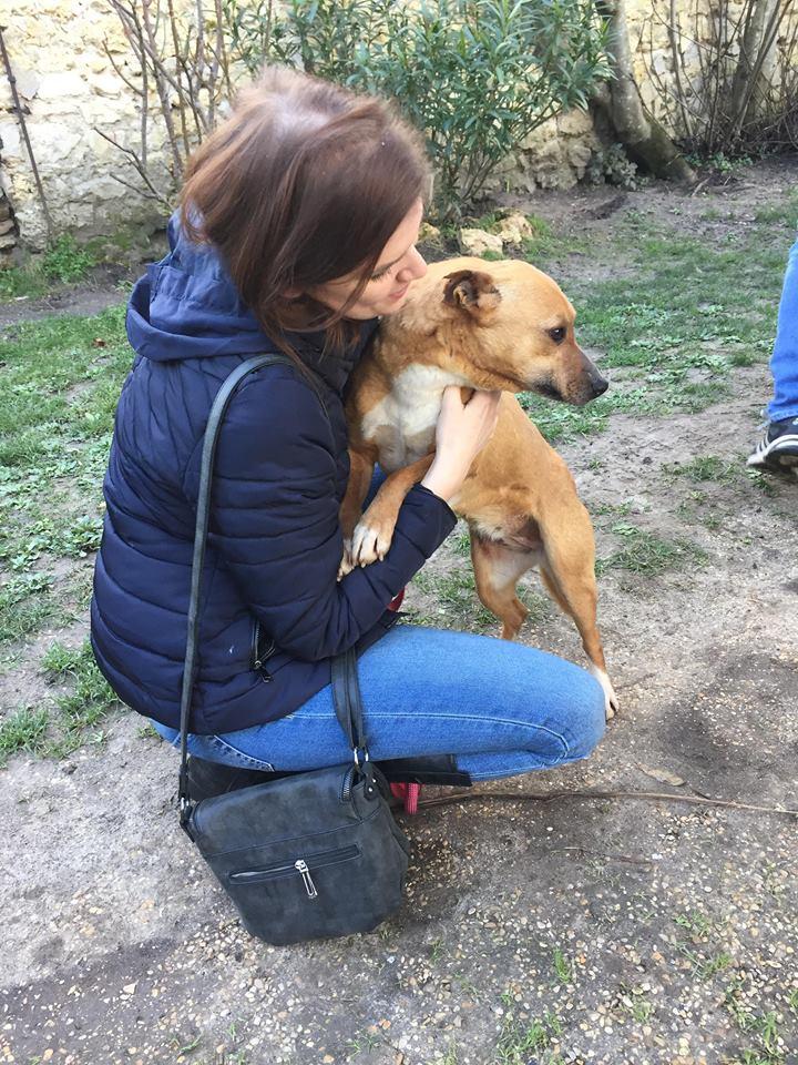 ARRIVEE PETITS SERBES DU 1ER FEVRIER 2018 PAR PET TAXI - Appel au financement 1100 € nécessaires - Page 2 27583311