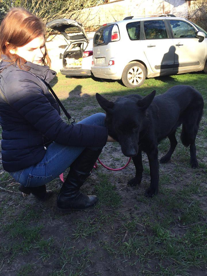 ARRIVEE PETITS SERBES DU 1ER FEVRIER 2018 PAR PET TAXI - Appel au financement 1100 € nécessaires - Page 2 27661510