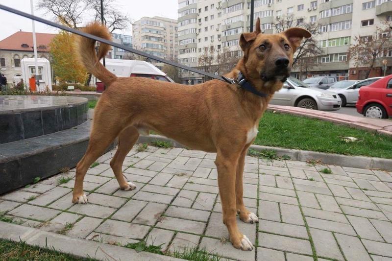 ROCKO -Chien mâle croisé, 25kg env., né en ? (CARMINA) - Réservé via association allemande Img_1230