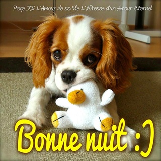 LES BONSOIRS DU SOIR  21766410