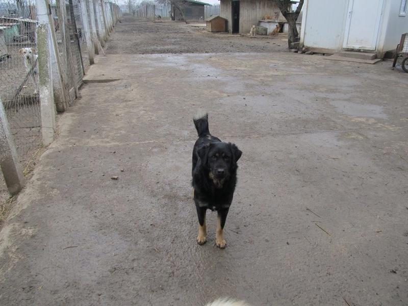 SELMA - Née 2013 - craintive  (BELLA) - 7 ans de refuge  02_20386