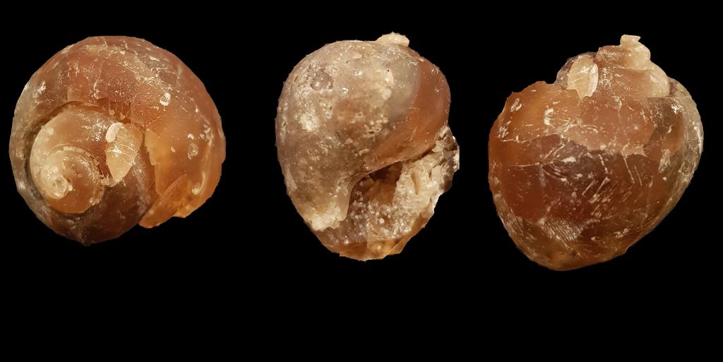 Fossiles de Bonnevault Montag10