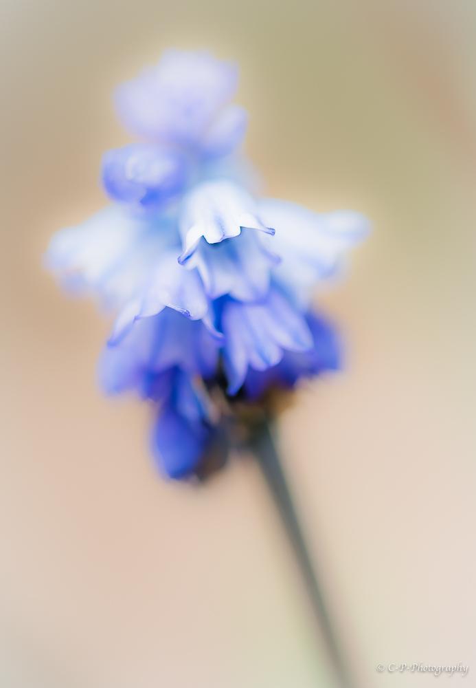un petit air de printemps _d816810