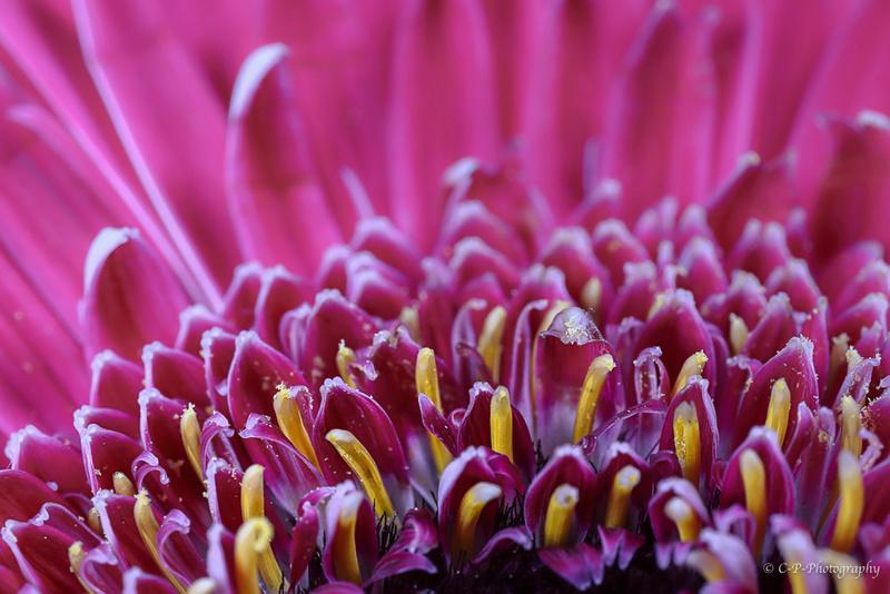 Sur les routes des pollens _mg_0121