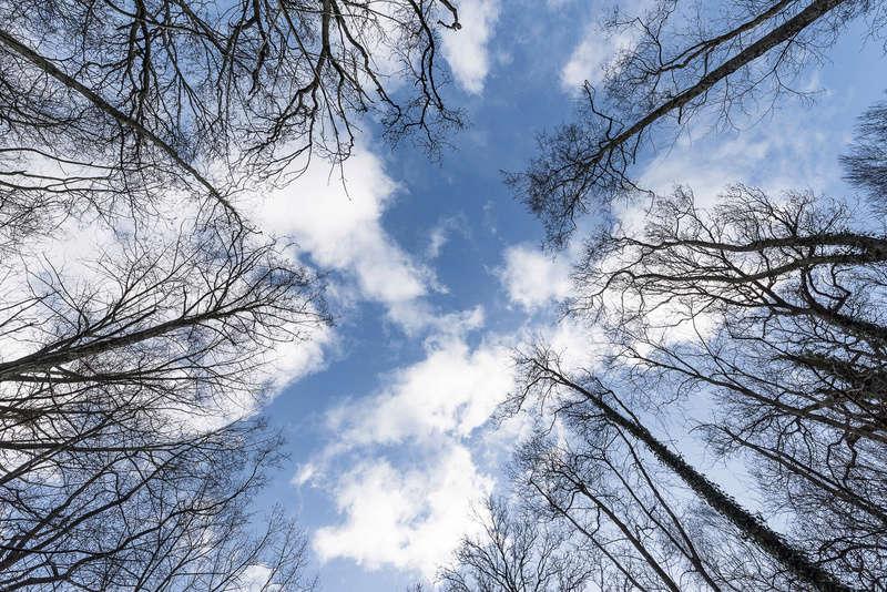 Balade en forêt  _dhb5610