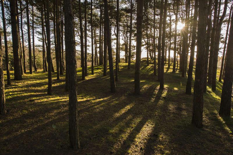 Balade en forêt  _dhb5611