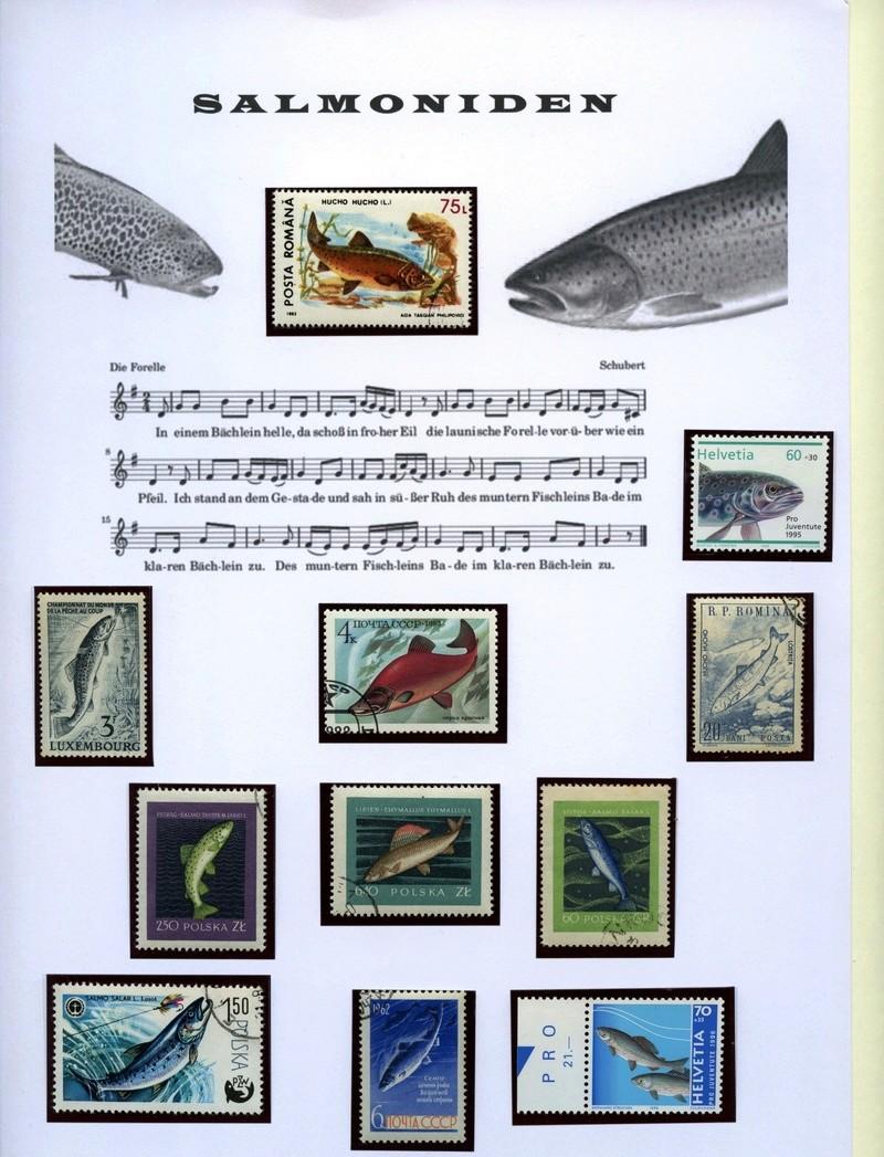 Liechtenstein - Fische Forell10