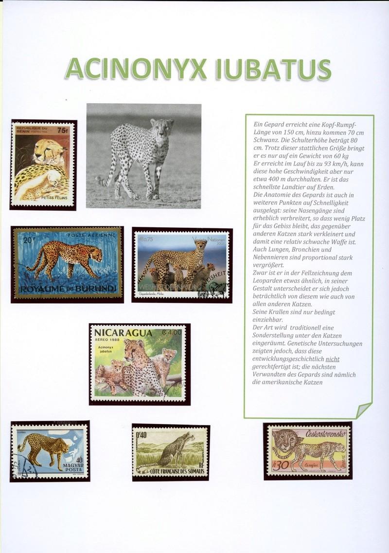 Katzen Gepard10
