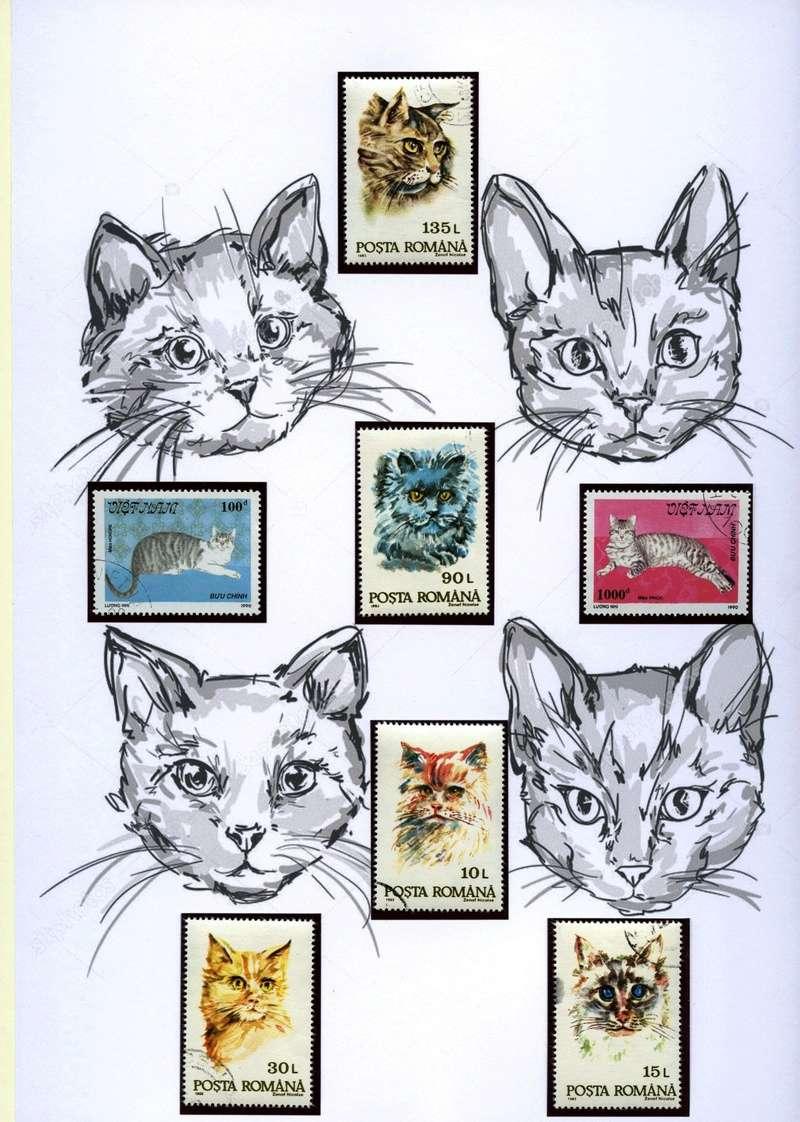 Katzen Katzen10