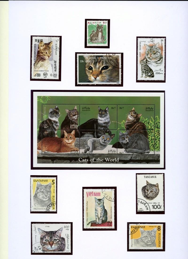Katzen Katzen12