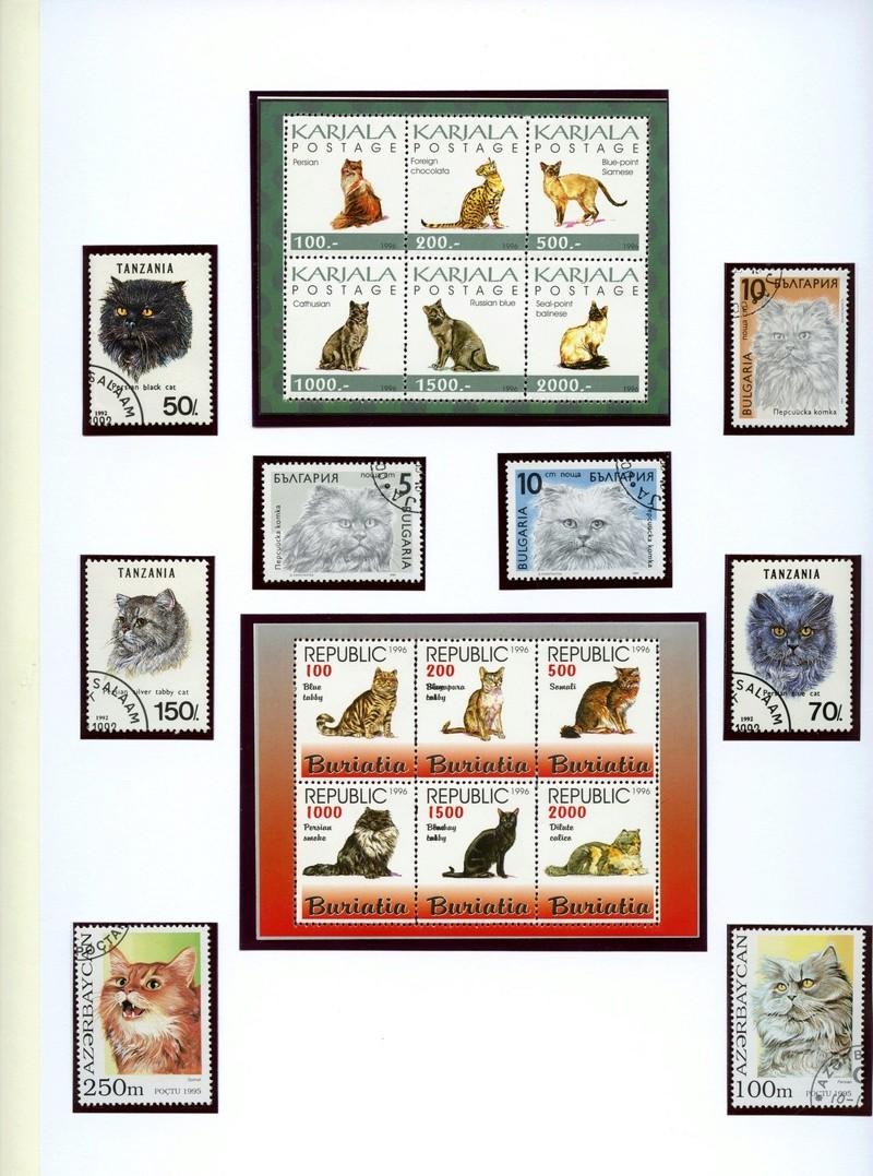 Katzen Katzen13