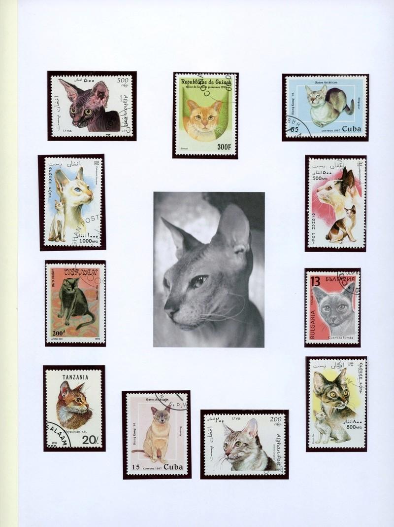 Katzen Katzen14