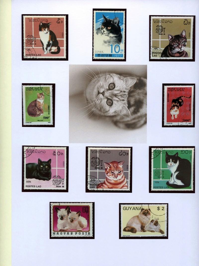 Katzen Katzen15