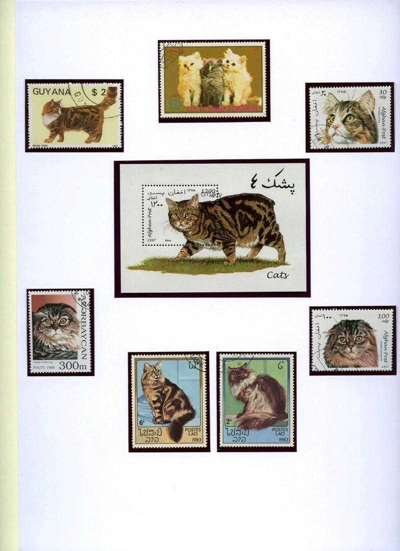 Katzen Katzen17