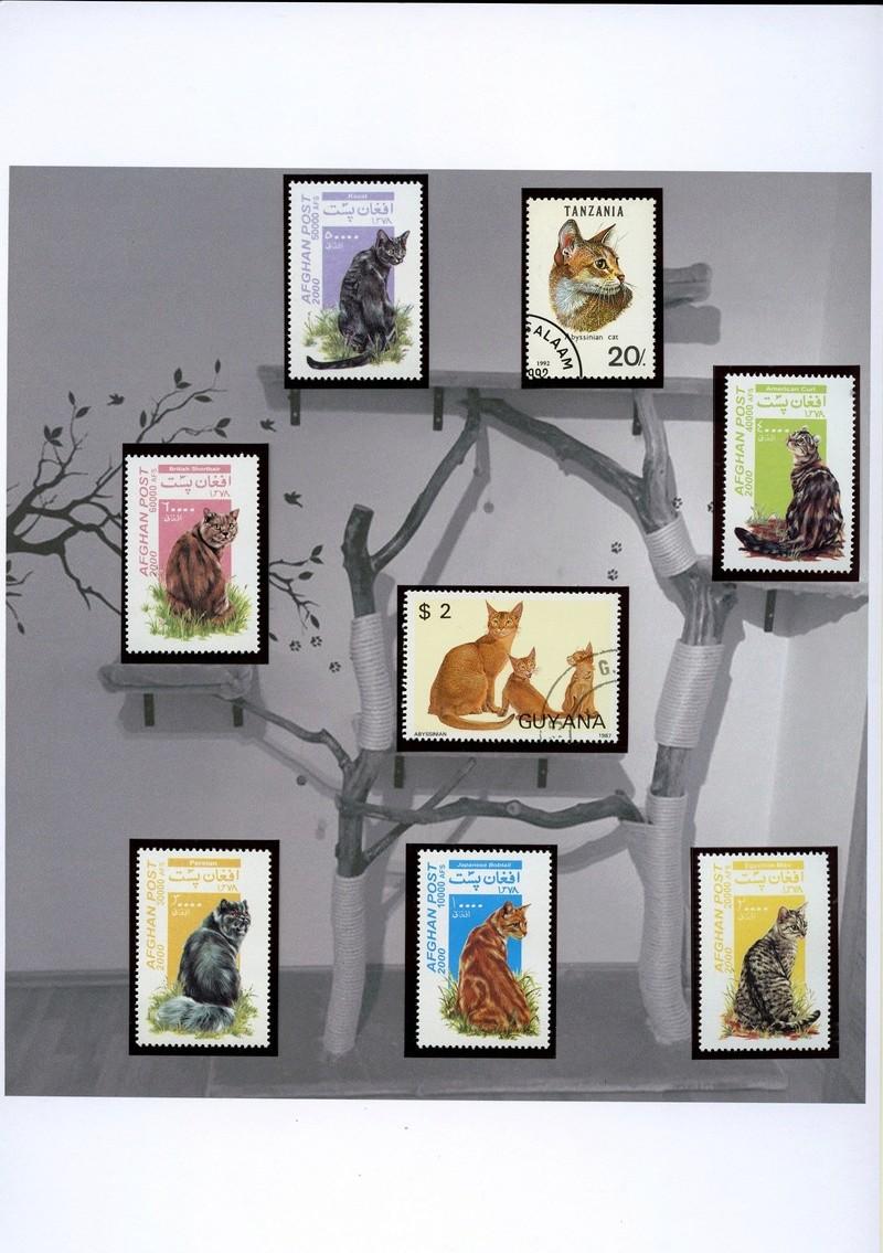 Katzen - Seite 2 Katzen18