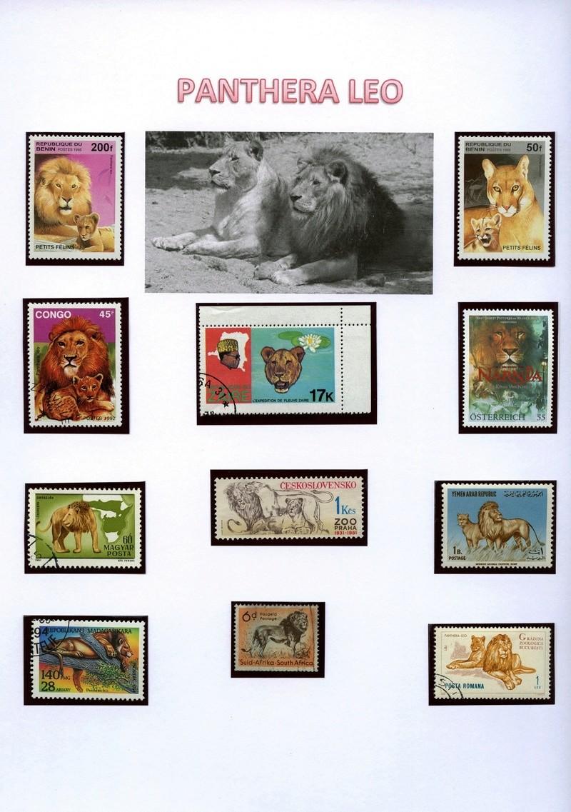Katzen - Seite 2 Lywenb10