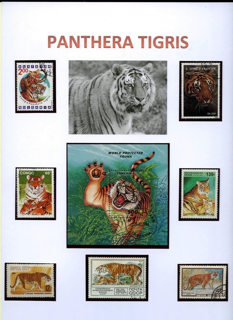 Katzen - Seite 2 Tigerb10