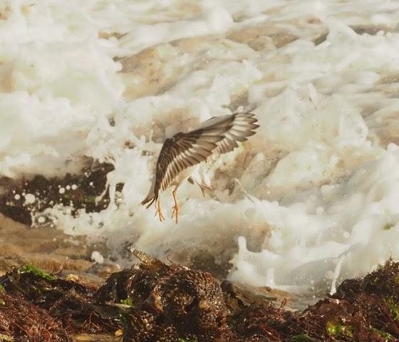 Oiseau à deviner Photo_10