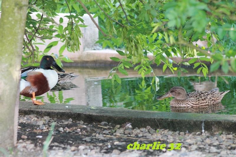Elevage canard  11_2-s10