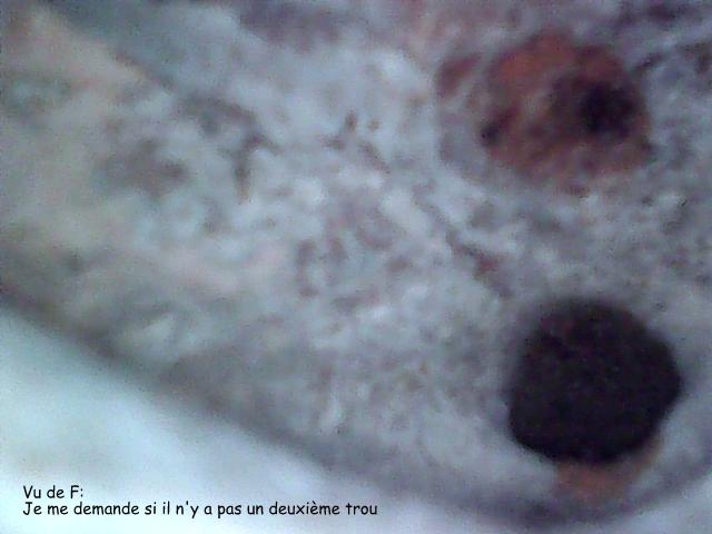 Culasse , bloc - Passages d' eau - Page 3 Stills17