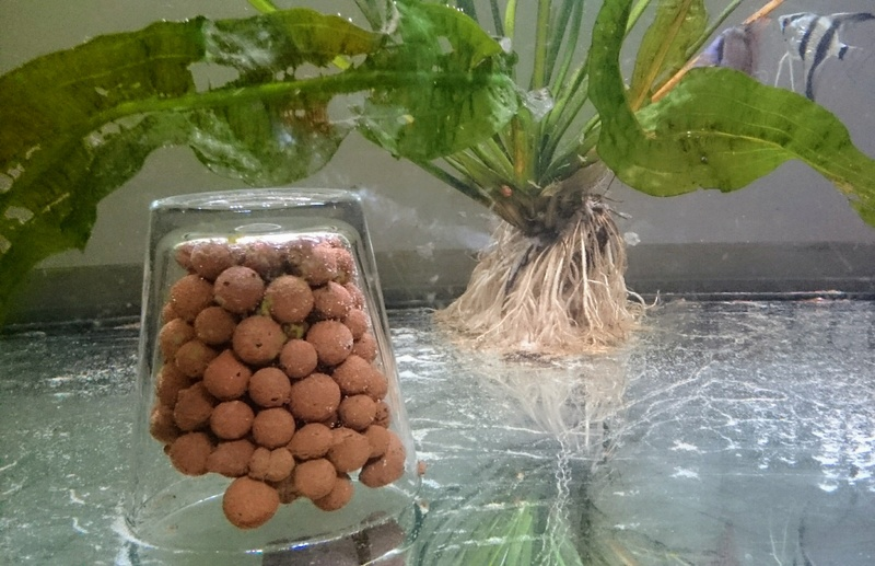 les plantes qui s'incrustent à l'aquarium Dsc_0610