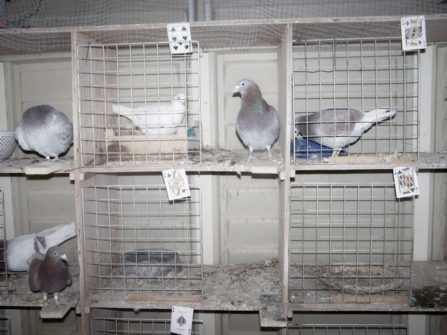 Stock birds. 2006-016