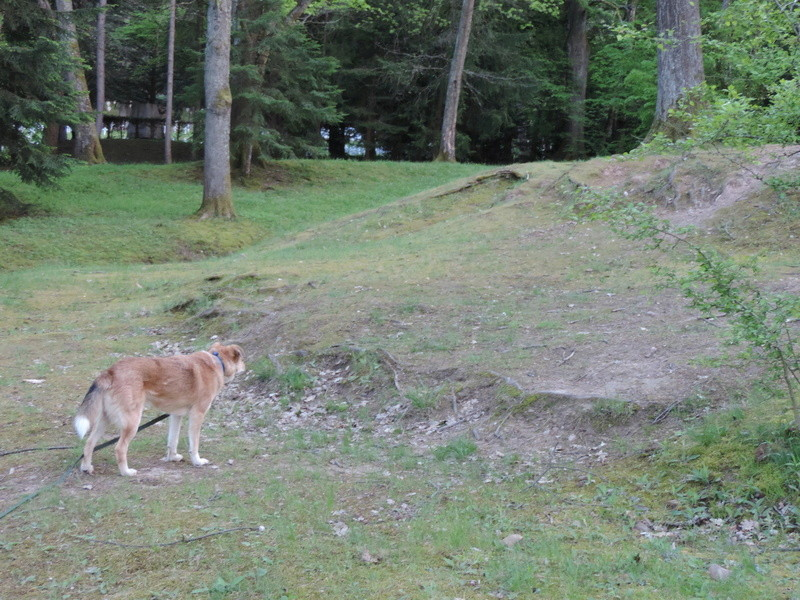 TIGER, mâle croisé, né en 2008, taille moyenne (Pascani) - adopté par Thierry (68) - Page 6 Dscn1519
