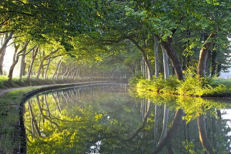 Le Canal Royal de Languedoc (Canal du Midi) Platan10