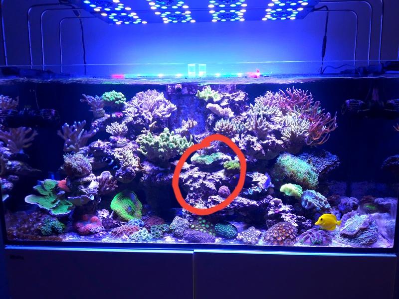 Reefer 425 xl de machotte - Page 5 20180413