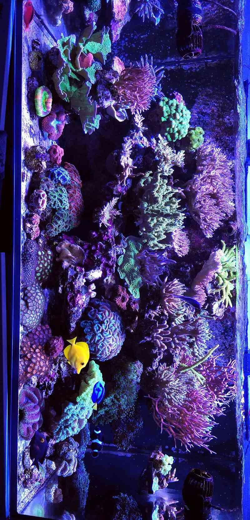 Reefer 425 xl de machotte - Page 7 Img_2010