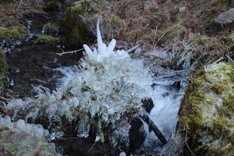 le long d'un torent l'année dernière en forêt noire Img_2510
