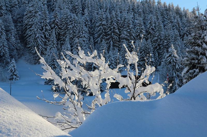 quelques photos des alpes du nord Img_4421