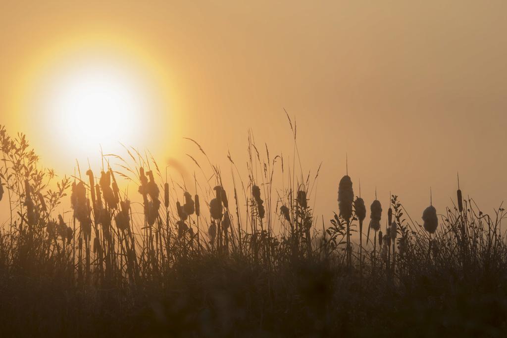 Soleil dans la brume Bocage12