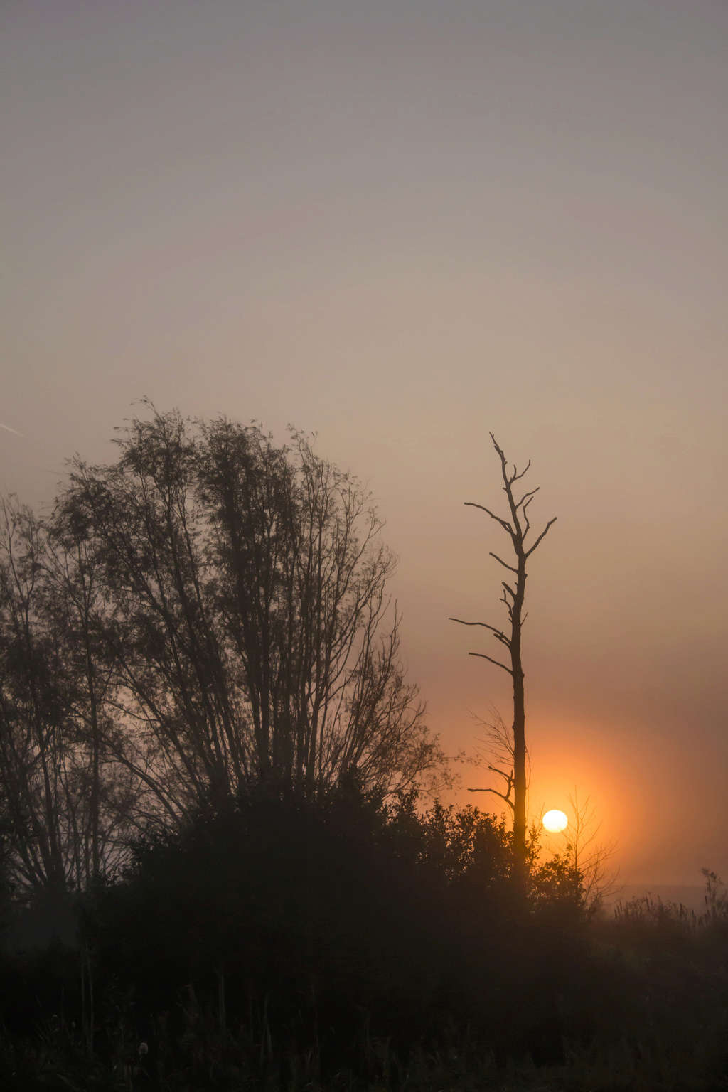 Soleil dans la brume Bocage13