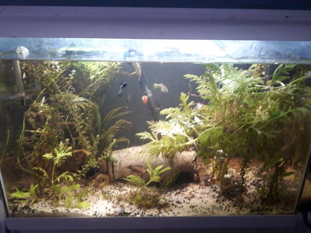 Mon aquarium 20180116