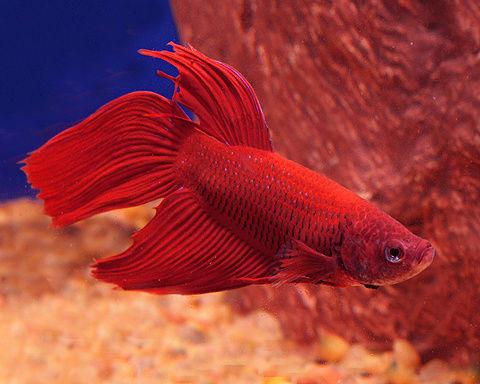 Mon aquarium Com10
