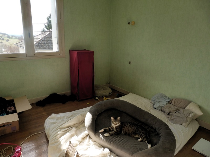 Hobbes, gros pépére de canapé ADOPTÉ Hobbes15