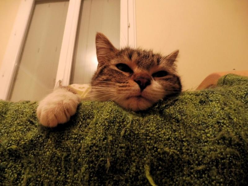 Hobbes, gros pépére de canapé ADOPTÉ Hobbes16