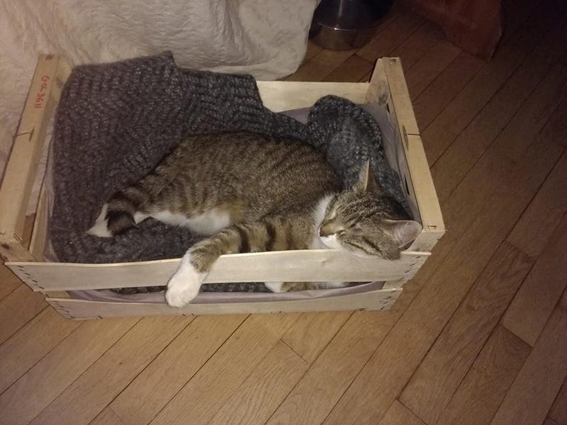 Hobbes, gros pépére de canapé ADOPTÉ Hobbes19