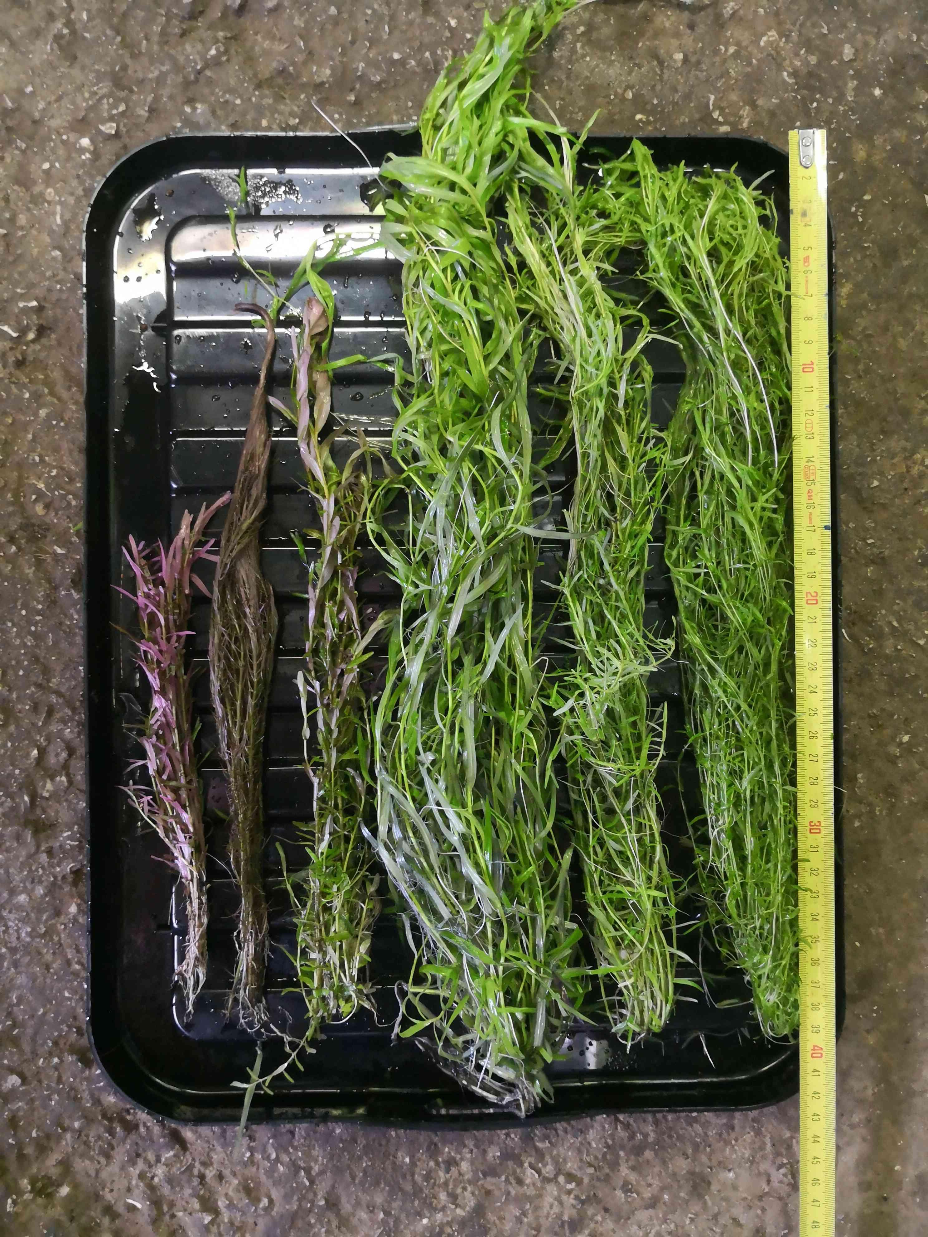 [Vends] Vente flash Plantes [73 + Envoi] Img_2012