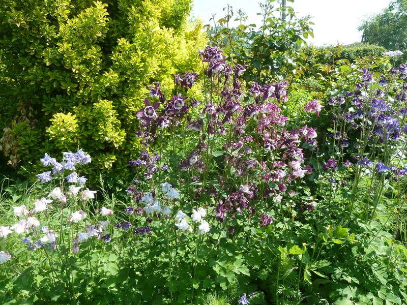 les jardins sont beaux en mai ! 20180550