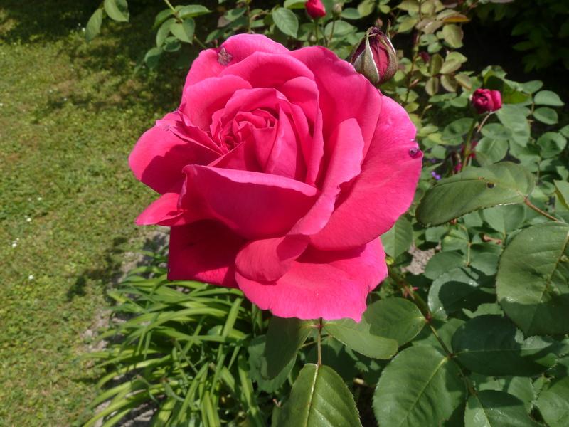 les jardins sont beaux en mai ! - Page 5 20180578