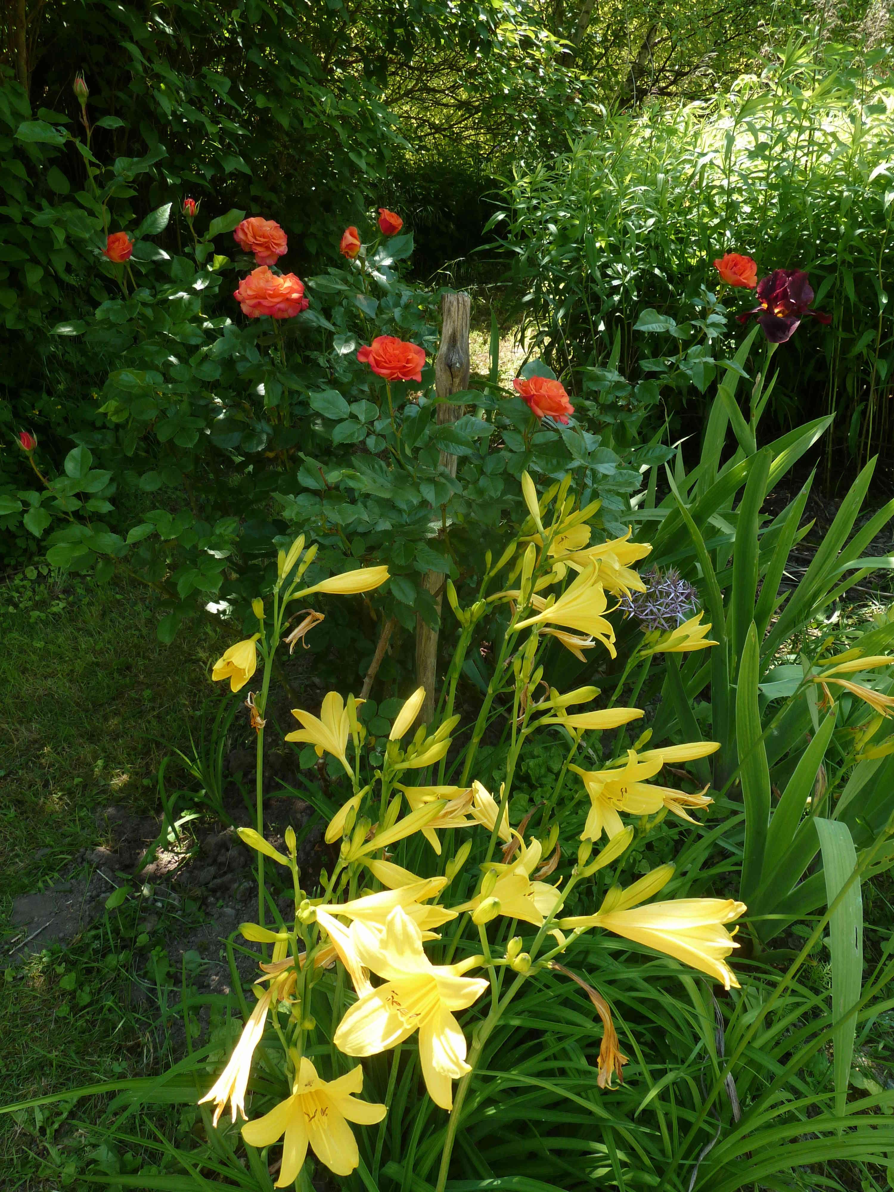 les jardins sont beaux en mai ! - Page 5 20180586