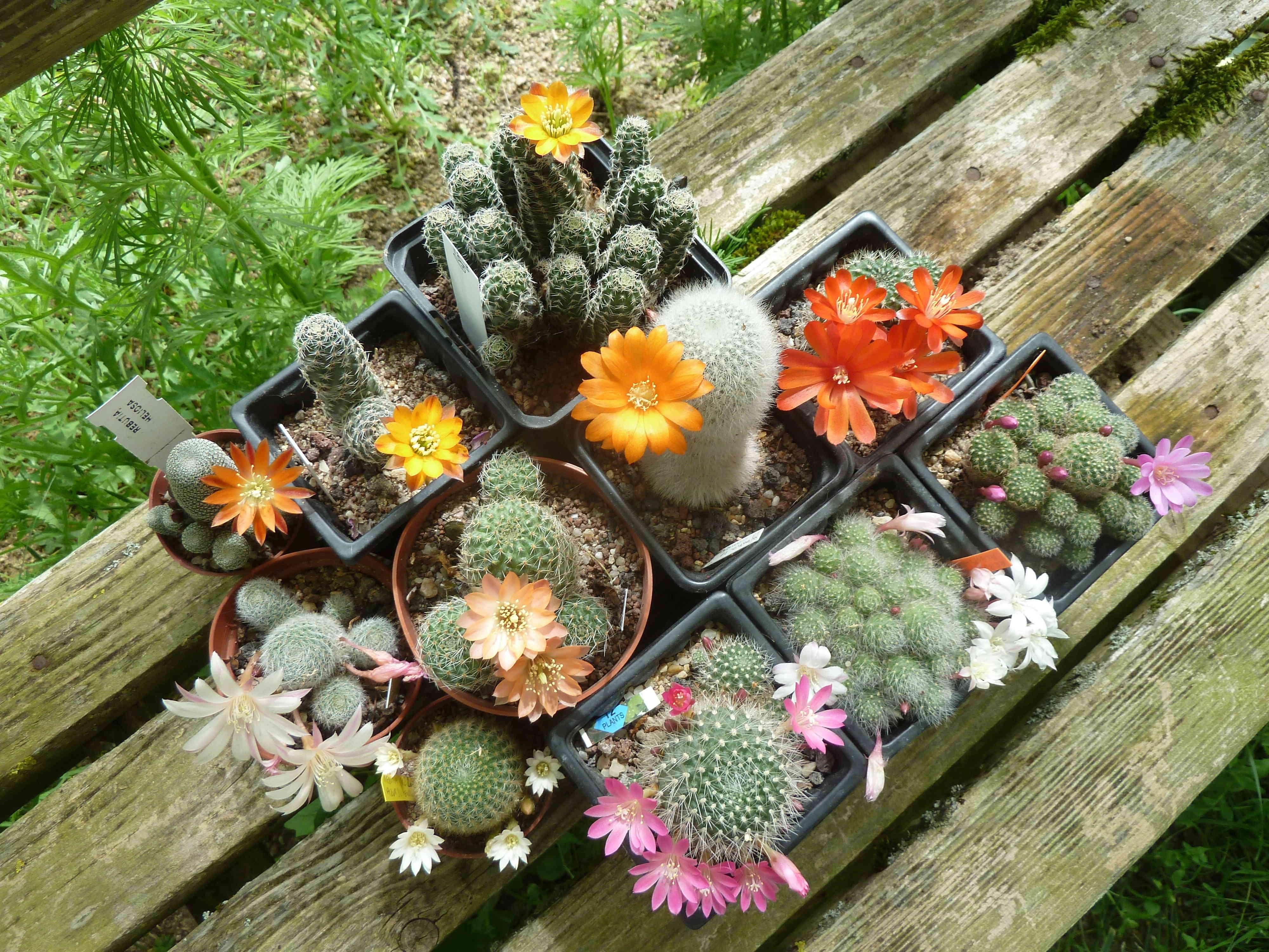 les jardins sont beaux en mai ! - Page 5 20180594