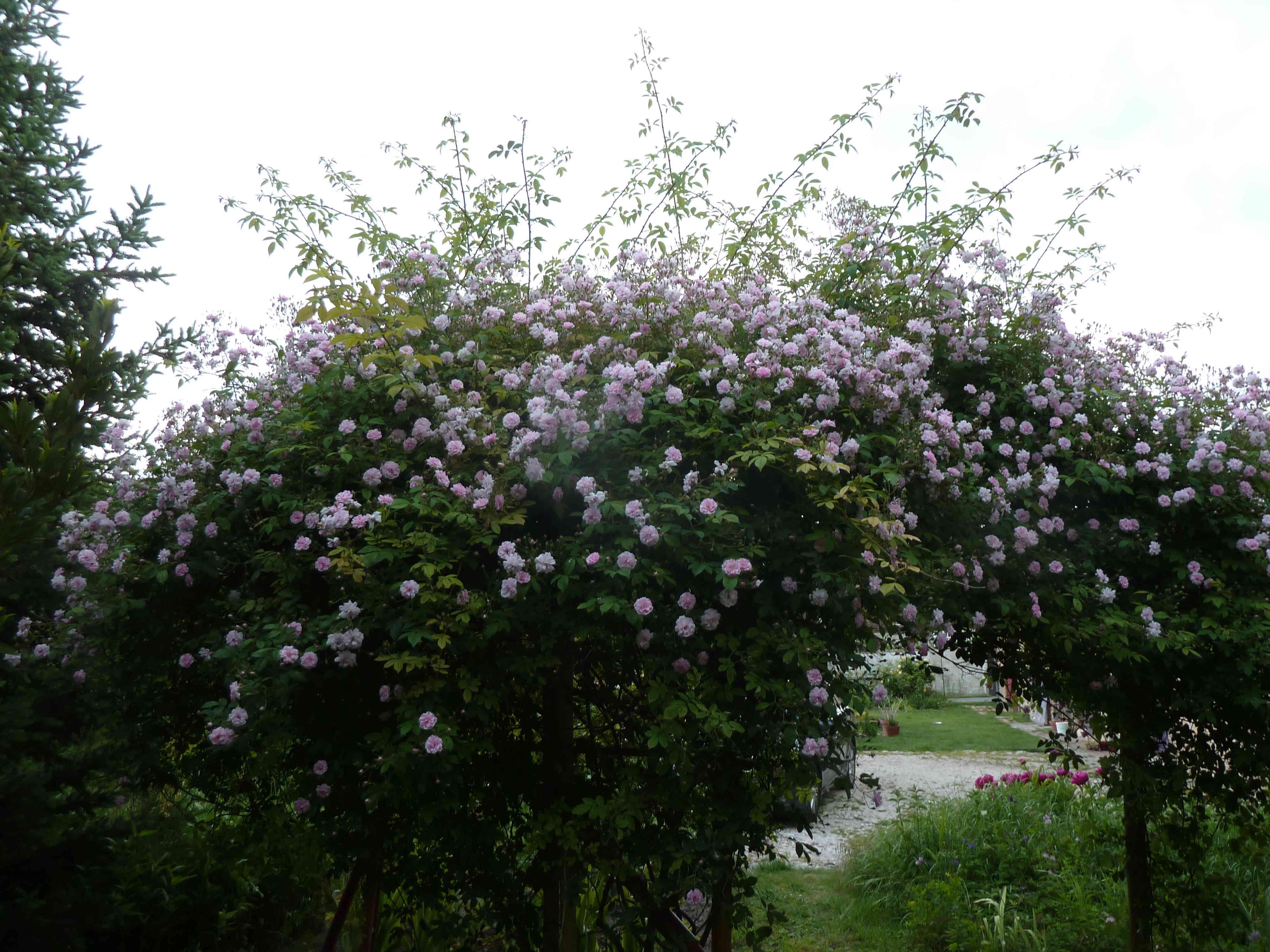 les jardins sont beaux en mai ! - Page 5 20180595
