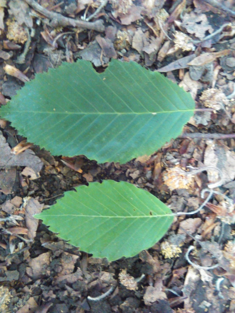 Apprendre à reconnaitre les arbres qui nous entourent Img_2045