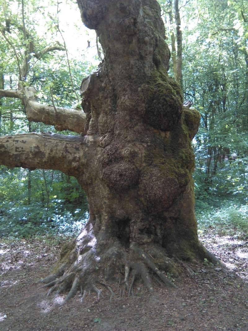 Apprendre à reconnaitre les arbres qui nous entourent Img_2049