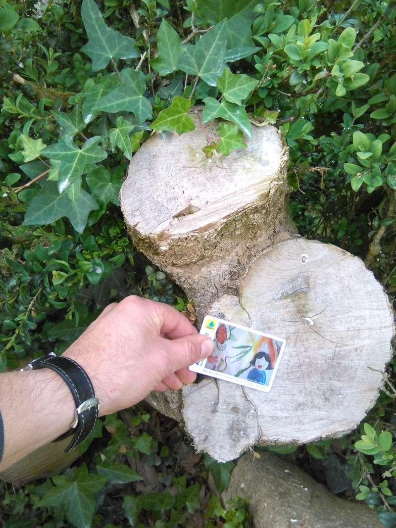 Apprendre à reconnaitre les arbres qui nous entourent Img_2051